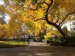 MSG_Fall tree